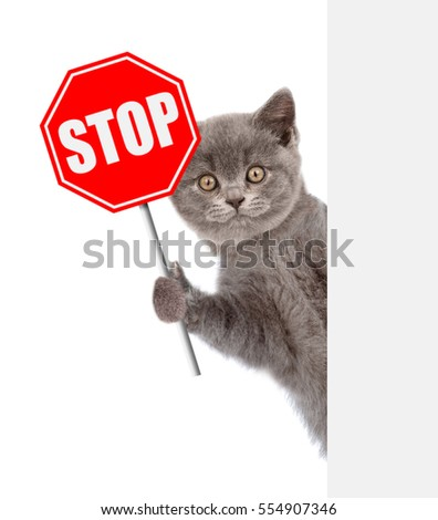 how to stop your cat from killing animals