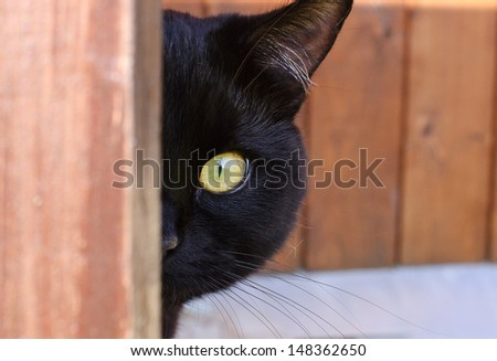 Cat peeping from behind a corner  - stock photo