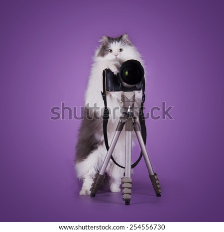 cat photographer with camera isolated on purple background - stock photo