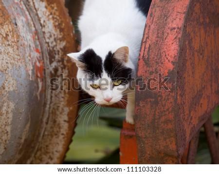 Cat playing - stock photo