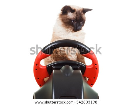 Cat playing a video game console steering wheel with deadpan expression on his face fluffy, isolated on white - stock photo