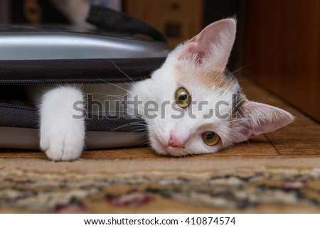 Cat playing hide and seek with a laptop bag. - stock photo