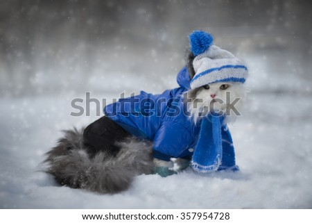 cat playing in the snow frosty day - stock photo