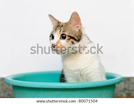 Cat playing in tray against white background