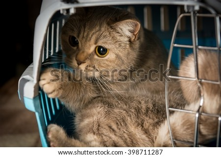 Cat playing inside pet carrier