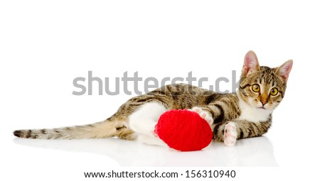 cat playing with a ball. isolated on white background