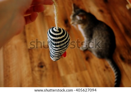 Cat playing with a toy mouse  - stock photo