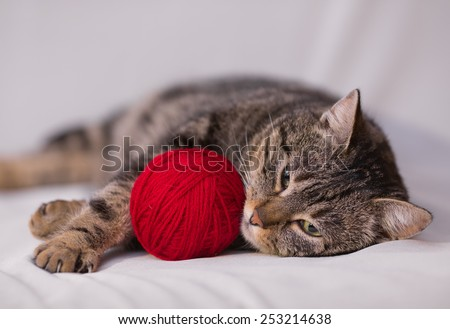 cat playing with ball of red yarn on white background - stock photo