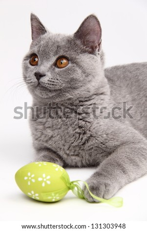 Cat playing with colored Easter eggs on Holiday - stock photo