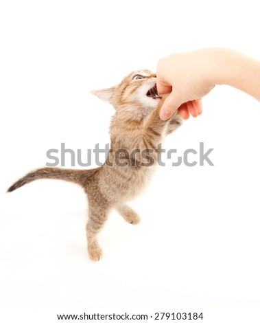 Cat playing with human hand - stock photo