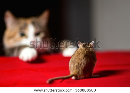 Cat playing with little gerbil mouse on red table - stock photo