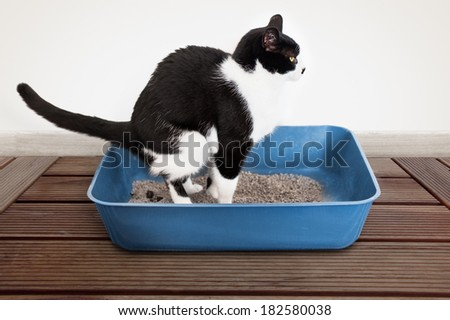 Pooped stock photos images pictures shutterstock for How to keep cat from pooping on floor