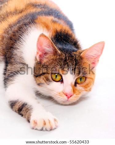 Cat portrait - stock photo
