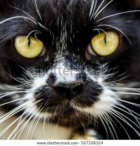 cat portrait close-up - stock photo
