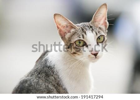 Cat portrait close up, only head crop,  - stock photo
