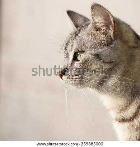 Cat portrait close up, only head crop, looking curious, cat in light background and space for advertising and text, cat head, square photo - stock photo