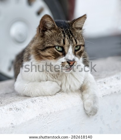 Cat portrait close up, serious looking cat in blurry background looking at the viewer with space for advertising and text, cat resting in the street on day time, lazy cat, funny cat, street cat