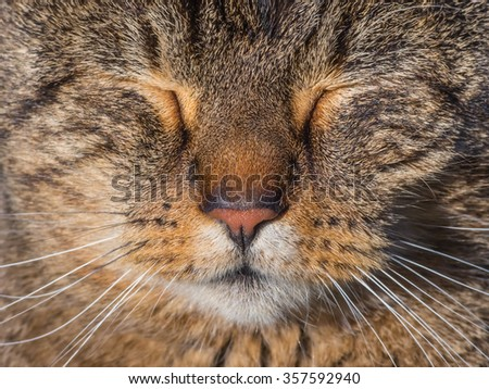 Cat portrait with closed eyes.