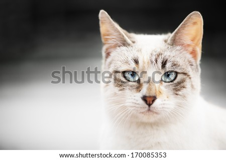 Cat portrait with grayscale background