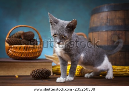 Cat posing for in the studio on a wooden table - stock photo