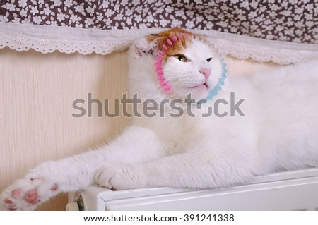 Cat Posing on Radiator - stock photo