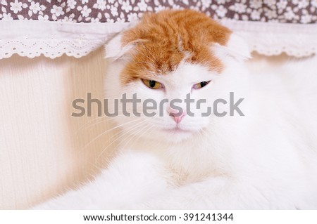 Cat Posing on Radiator