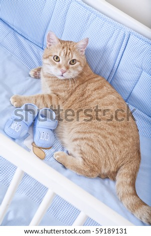 Cat prepared for the birth of a child - stock photo