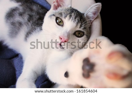 Cat reaches after me - stock photo