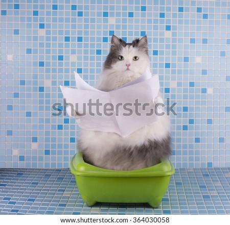 Cat reads the morning newspaper while sitting on the toilet