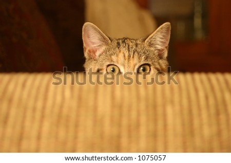 Cat Ready to Attack - stock photo
