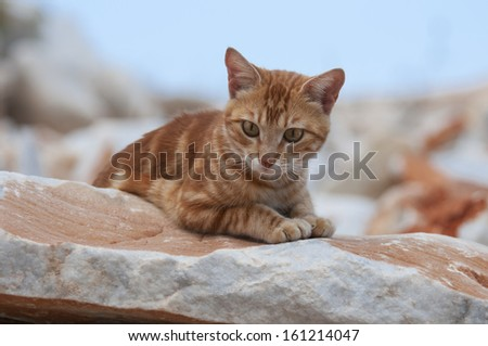 Cat, red classic tabby, on a rocky wall, Cyclades
