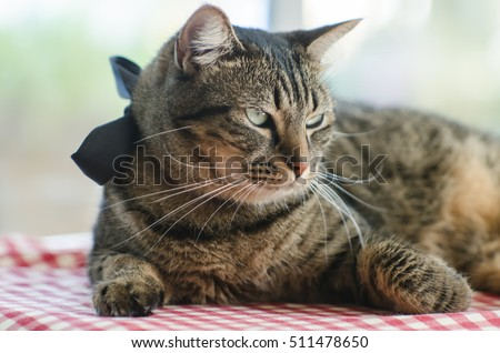 cat relax on wooden table