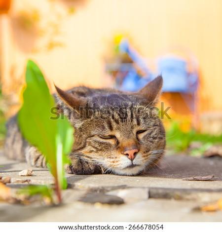 cat relaxing in the garden - stock photo