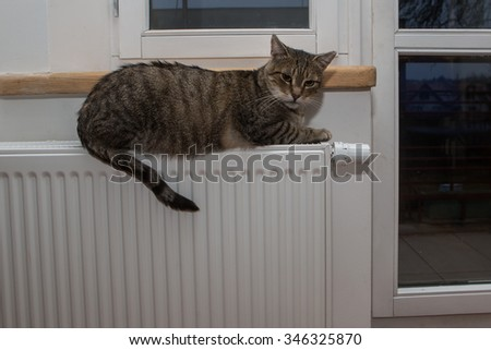 cat relaxing on a warm radiator  - stock photo
