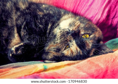 Cat relaxing on back - stock photo