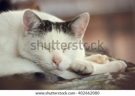 Cat relaxing on the couch