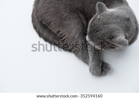 Cat relaxing on the couch in colorful blur background, cute funny cat close up, elaxing cat, cat resting, cat playing at home - stock photo