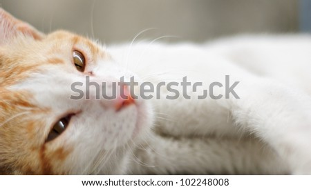 Cat Resting and Lying Down - stock photo