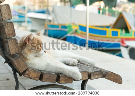 Cat resting by the traditional boats in Marsaxlokk village, Malta - stock photo