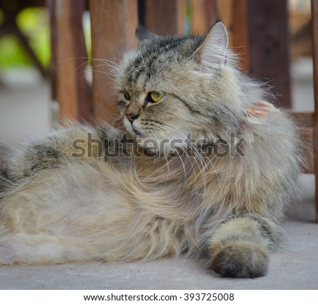Cat, resting cat on a sofa in colorful blur background, cute funny cat close up, young playful cat  - stock photo