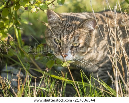 cat resting in the grass - stock photo