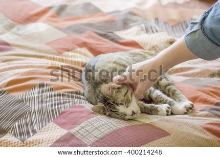 Cat resting on a bed with eyes closed while is being stoked by woman's hand.