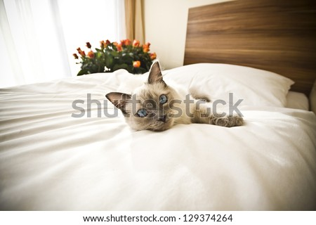 Cat resting on the bed - stock photo