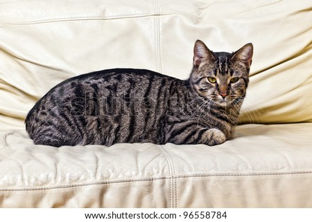 cat resting on the sofa - stock photo
