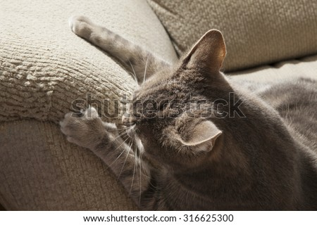 cat ruining couch with claws - stock photo