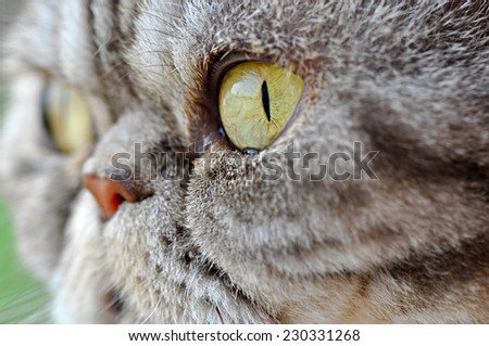 Cat's eye - stock photo
