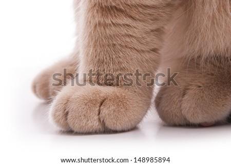 Cat's feet. Beige color. - stock photo