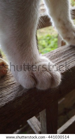 Cat's white paw feet  cute