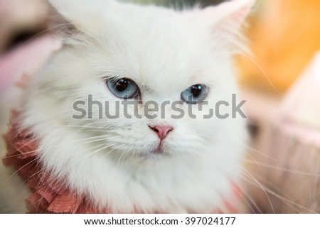 Cat, selective focus, on blurred background
