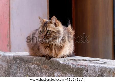 Cat, serious cat close up, young playful cat , domestic cat, relaxing cat, cat resting, elegant cat - stock photo